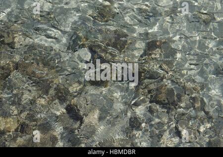 fish in the sea - Stock Photo