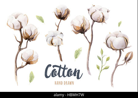 Set of hand drawn watercolour Cotton boll. Isolated watercolor p - Stock Photo