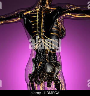 science anatomy of human body in x-ray with glow blood vessels - Stock Photo