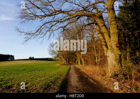 Field road in late autumn on 'Mossauer Höhe' near Erbach in the Odenwald, Hesse, Germany - Stock Photo