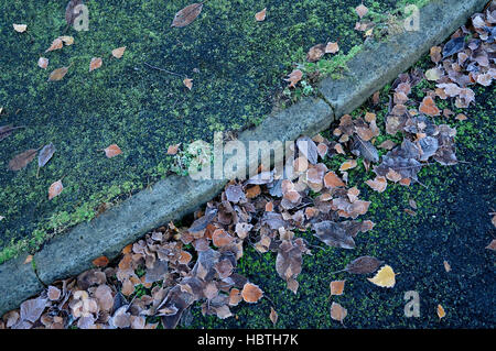 fallen leaves on the roadside - Stock Photo