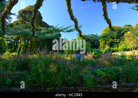 june blakes garden wicklow mix mixed bed border perennial perennials summer larch tree branches leading RM Floral - Stock Photo