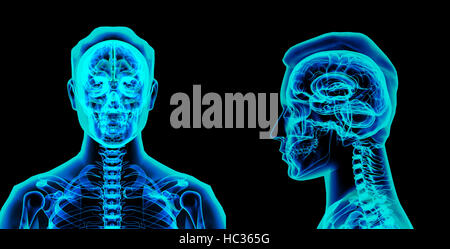 3d rendered illustration of the brain - Stock Photo