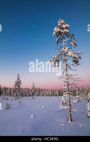 Winter in Syöte national park, Finland. - Stock Photo