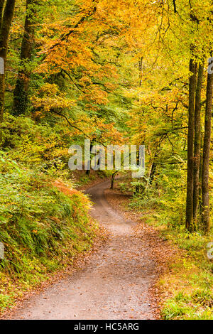Track though an autumn woodland near Dulverton in the Exmoor National Park. Somerset. - Stock Photo