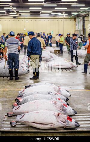 TOKYO, JAPAN - AUGUST 1, 2015: Prospective buyers inspect tuna displayed at Tsukiji Market. Tsukiji is considered - Stock Photo