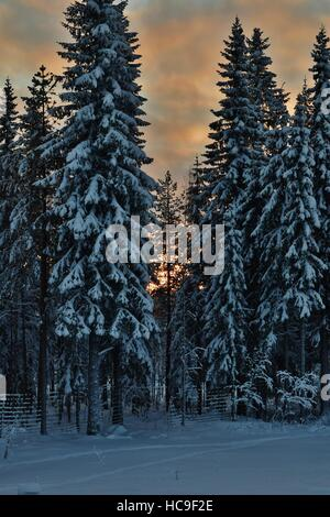 Sunset in the winter wood - Stock Photo
