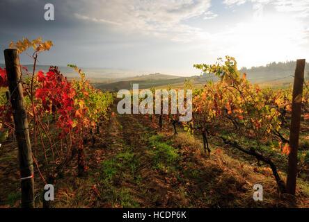 Chianti vineyard landscape in autumn, Tuscany, Italy