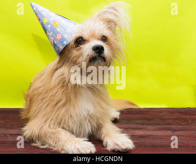 The photo shows a dog in the cap - Stock Photo