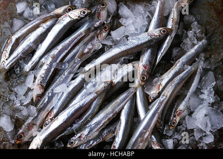 Lot of raw fresh anchovies fishes on crushed ice over old dark metal background. Top view. Sea food background theme. - Stock Photo