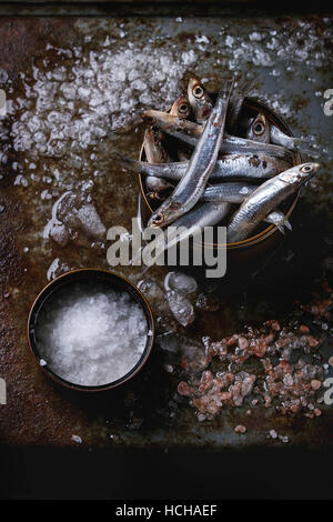 Lot of raw fresh anchovies fishes in tin can on crushed ice with pink and sea salt over old dark metal background. - Stock Photo