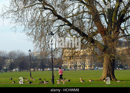 Clapham Common, London, UK. 9th Dec, 2016. UK Weather.  A woman jogs through a flock of Canada geese. Credit:  JOHNNY - Stock Photo