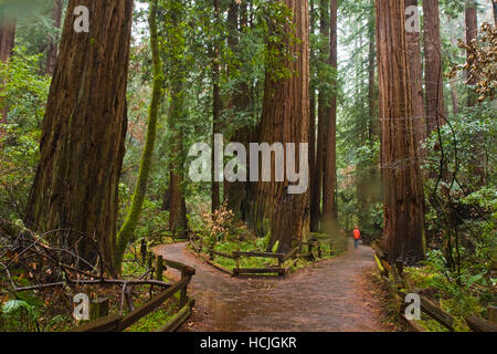 Hiker Zach Podell-Eberhardt strolls through the Cathedral Grove redwoods on a rainy day in Muir Woods National Monument, - Stock Photo