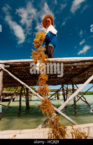 Wa Nuri is part of a cooperative of fisherman and aquaculture workers trying to create more sustainable practices - Stock Photo