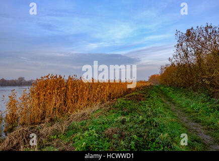 Evening winter sunset seen on a large bank of reeds as seen in a wildlife reserve in the United Kingdom - Stock Photo