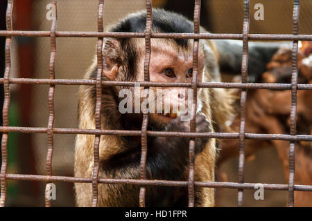 Lonely sad monkey in the zoo cage - Stock Photo
