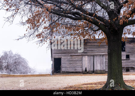 Barn and oak tree covered in ice after a winter storm near Burrton, Kansas - Stock Photo