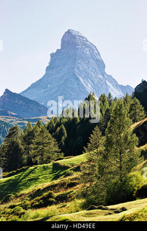 Matterhorn mountain and green forest on the hill in Zermatt of Switzerland in summer. - Stock Photo