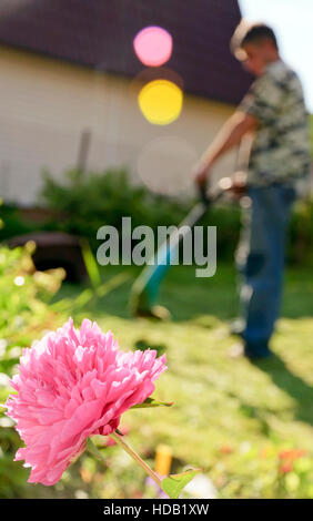 Peony flower and silhouette of the Man working in the garden with grass trimmer - Stock Photo