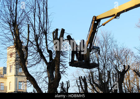 workers cut branches and trims a trees limes using the lift in the park. - Stock Photo