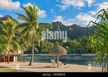 Chairs on beach with palm trees, Mo'orea, South Pacific, French Polynesia - Stock Photo
