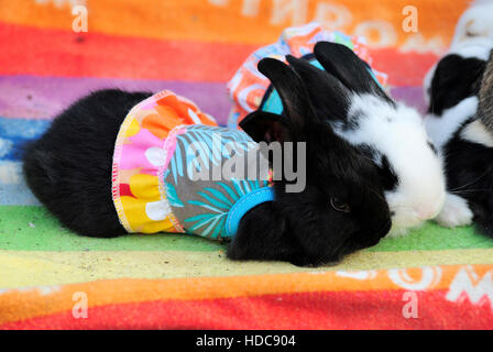 Rabbits dressed in colourful skirts at bird souq in Doha, Qatar. - Stock Photo