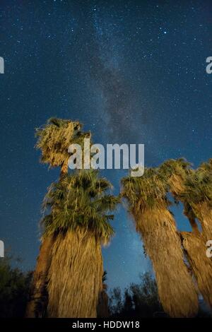 The starry night sky over palm trees at the Oasis of Mara in the Joshua Tree National Park September 5, 2016 in - Stock Photo