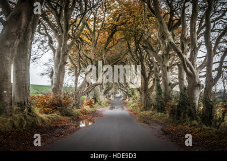 The Dark Hedges in Northern Ireland - Stock Photo
