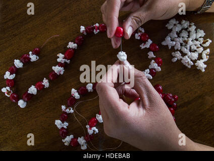 Close up of woman's hands placing popcorn and a fresh cranberry on a needle and thread to add to Christmas garland. - Stock Photo