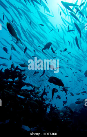 Healthy blue water reef silhouette with schools of fish backlit by the sun. - Stock Photo