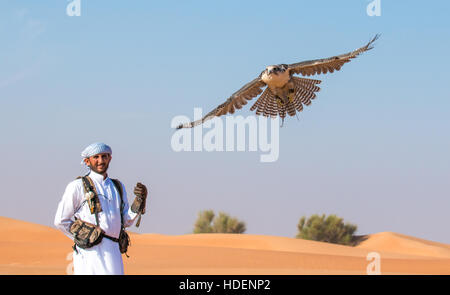 Male saker falcon (Falco cherrug) with a falconer dressed in traditional arab dress during a falconry show. Dubai, - Stock Photo