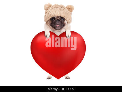 lovely cute pug puppy dog hanging with paws on big valentine's day heart, isolated on white background - Stock Photo