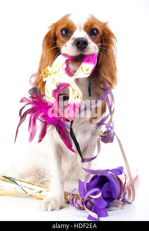 Happy new year! Illustrate your work with king charles spaniel New year illustration.  Dog celebrate New year's - Stock Photo