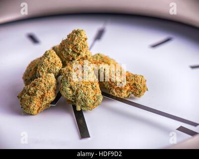 Macro detail of dried cannabis buds on a clock with time in 4:20 - medical marijuana concept background - Stock Photo