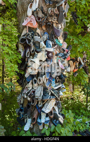Discarded shoes nailed to shoe tree after hiking in cape for What is a tree trunk covered with 4 letters