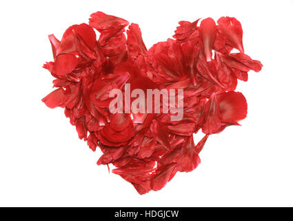 A heart of rose petals .Isolated - Stock Photo