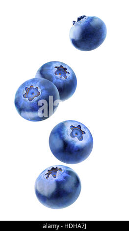 Isolated flying berries. Five falling blueberry fruits isolated on white background with clipping path - Stock Photo