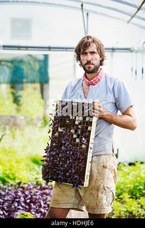 A man holding a frame with small seedlings in each pocket. - Stock Photo