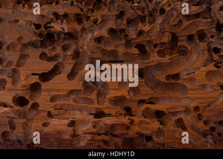 Old wood eaten by bark beetle - Stock Photo