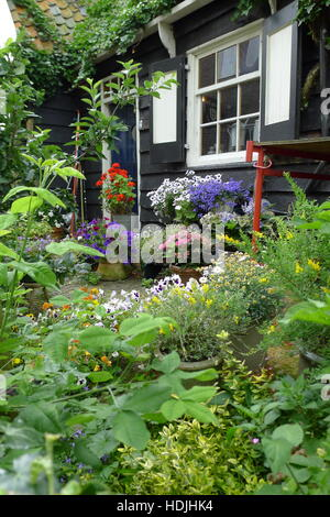 summergarden with pansies rose and flowers in pots - Stock Photo