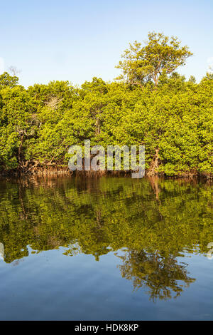 Florida, Sanibel Island, J.N. 'Ding' Darling National Wildlife Refuge, Wildlife Drive, view from Wulfert  Keys Trail, - Stock Photo