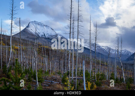 Mountains on the East side of Glacier NP in Montana with autumn colors and new forest growth after a wildfire cleared - Stock Photo