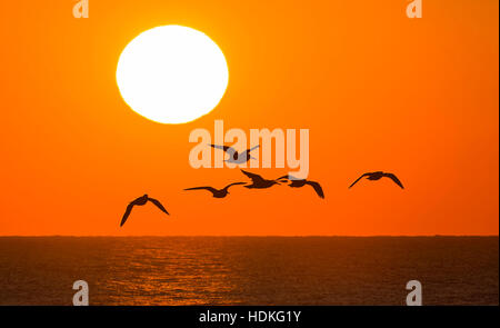 Silhouette of birds flying over the sea as the sun sets in West Sussex, England, UK.