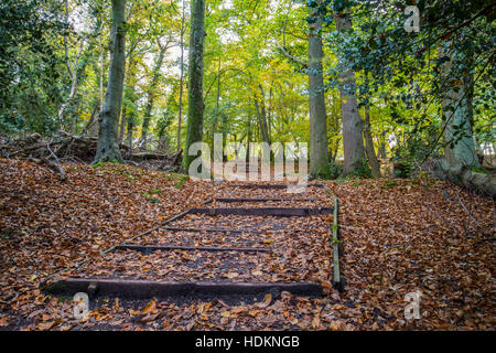 wooden path leading to woods with sun shining through trees in autumn - Stock Photo