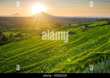 Beautiful sunrise over the Jatiluwih Rice Terraces in Bali, Indonesia - Stock Photo