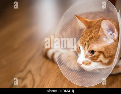 Image of cat with cone lying on a wooden floor. - Stock Photo