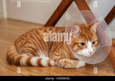 Image of ginger cat on the floor with cone. - Stock Photo