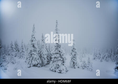 Trees covered with hoarfrost and snow in mountains. Mysterious winter landscape majestic mountains in winter. Magical - Stock Photo