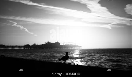Brighton Beach and Palace Pier seascape in black and white - Stock Photo