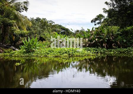 Flora and fauna around Las Isletas, Lake Nicaragua - Stock Photo